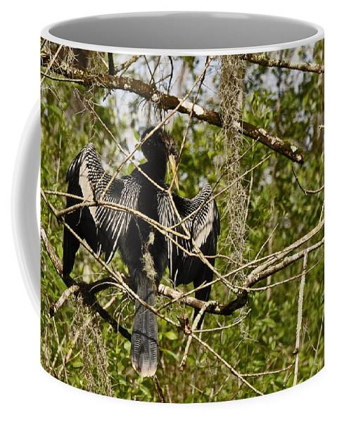 Corksrew Swamp Santuary Coffee Mug featuring the photograph Anhinga Preening by Christine Stonebridge