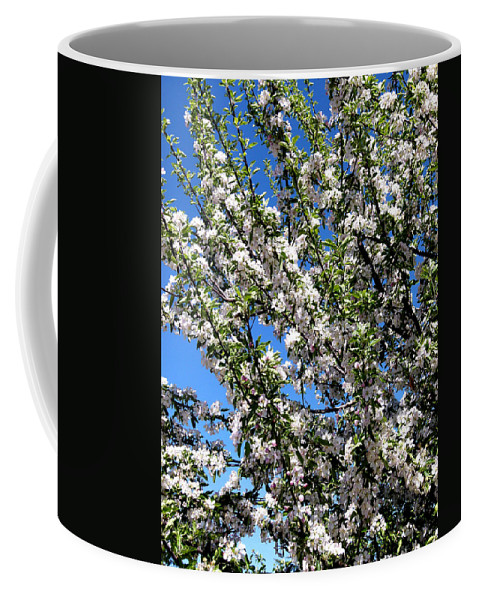 Apple Tree Coffee Mug featuring the photograph Apple Tree In Bloom by Will Borden