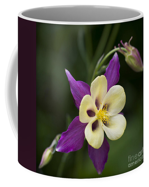 Clare Bambers Coffee Mug featuring the photograph Aquilegia  Columbine Flower by Clare Bambers