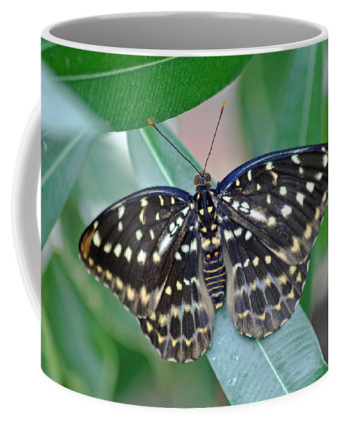 Archduke Butterfl Coffee Mug featuring the photograph Archduke Butterfly by Tony Murtagh