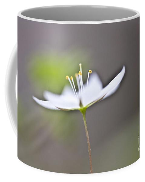 Heiko Coffee Mug featuring the photograph Arctic Starflower by Heiko Koehrer-Wagner