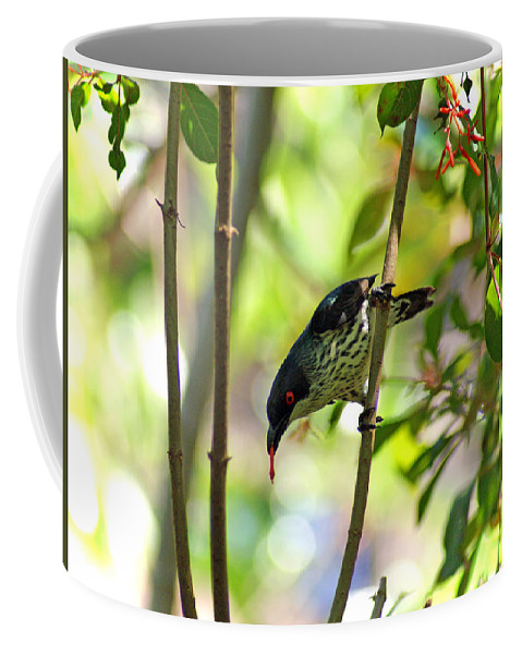 Bird Coffee Mug featuring the photograph Asian Glossy Starling by Jean Haynes