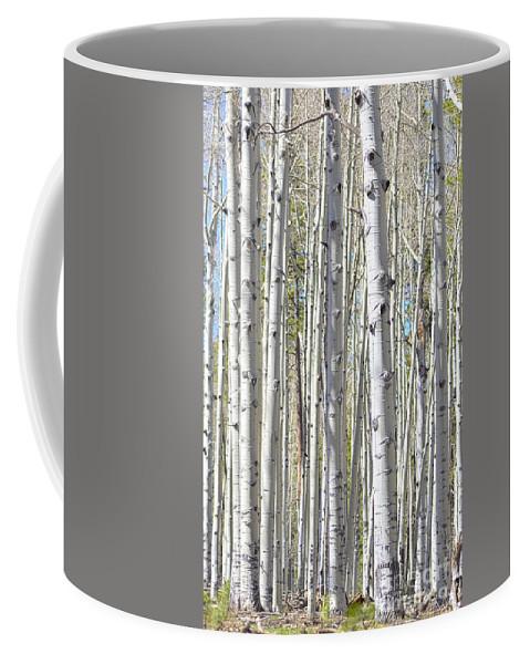 Fine Art Coffee Mug featuring the photograph Aspen Grove by Donna Greene