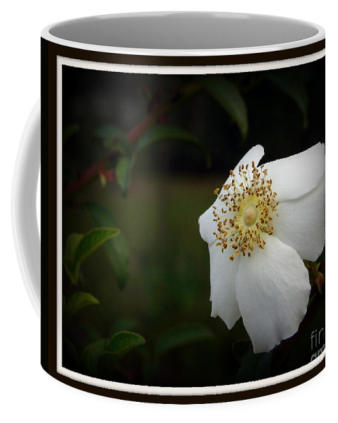 Knockout Rose Coffee Mug featuring the photograph Aspire by Priscilla Richardson