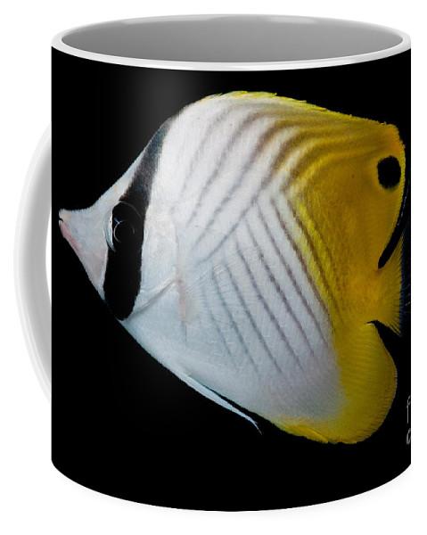 Auriga Butterfly Fish Coffee Mug featuring the photograph Auriga Butterfly Fish by Dant� Fenolio