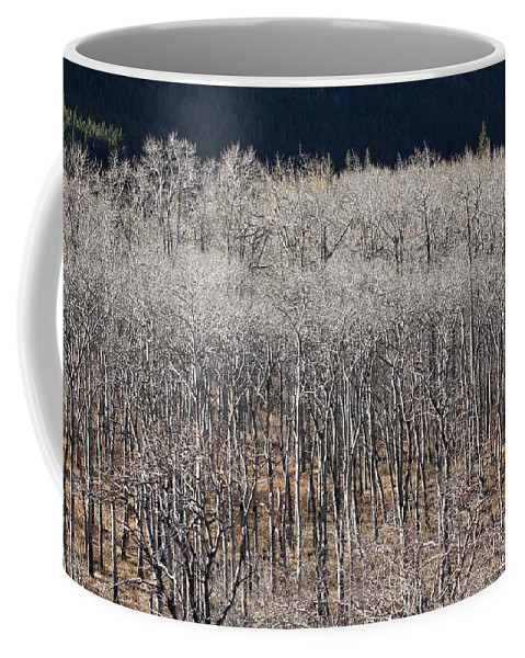 Nature Coffee Mug featuring the photograph Autumn Birches by Ian Mcadie