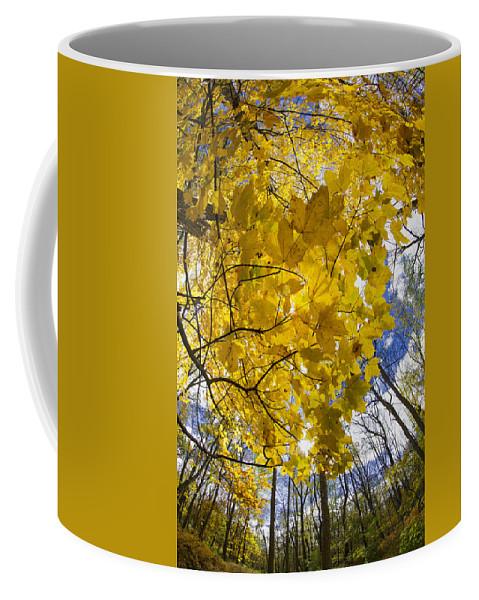Autumn Coffee Mug featuring the photograph Autumn Glow by Rick Berk