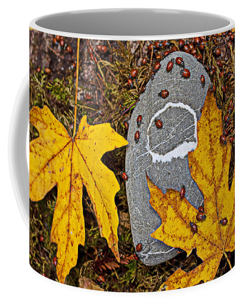 Ladybugs Bug Bugs Insects Coffee Mug featuring the photograph Autumn Ladybugs by Garry Gay
