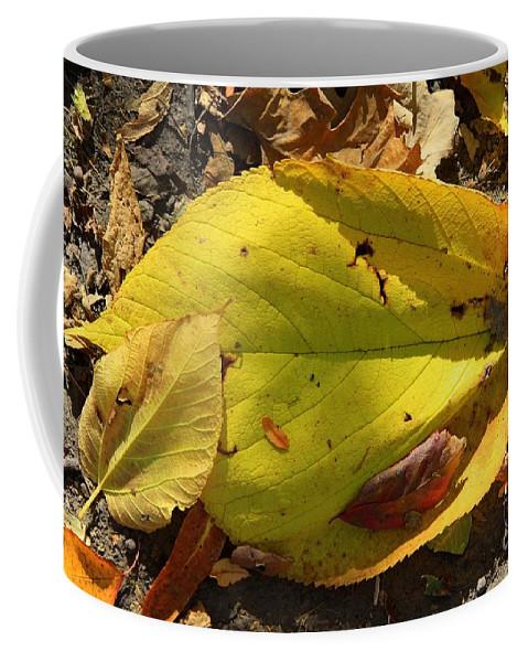 Fall Coffee Mug featuring the photograph Autumn Leaf by Rick Rauzi