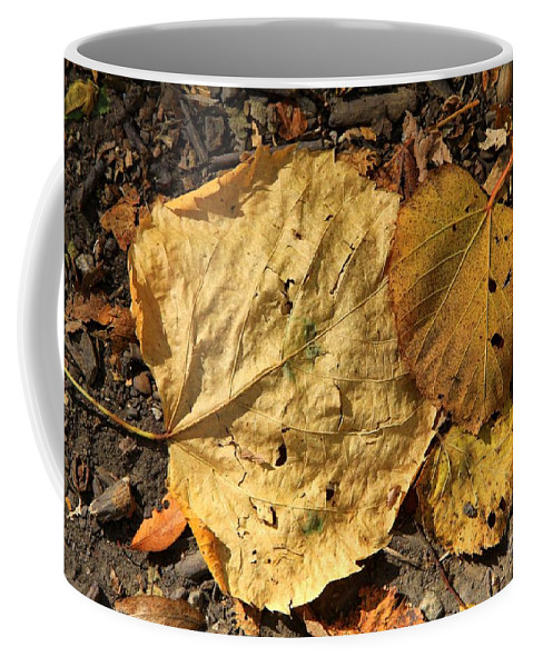 Fall Coffee Mug featuring the photograph Autumn Leafs by Rick Rauzi