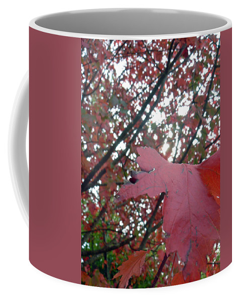 Autumn Coffee Mug featuring the photograph Autumn Red Maple Tree by Pamela Patch