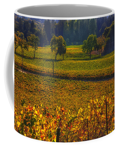Autumn Coffee Mug featuring the photograph Autumn Vineyards by Garry Gay