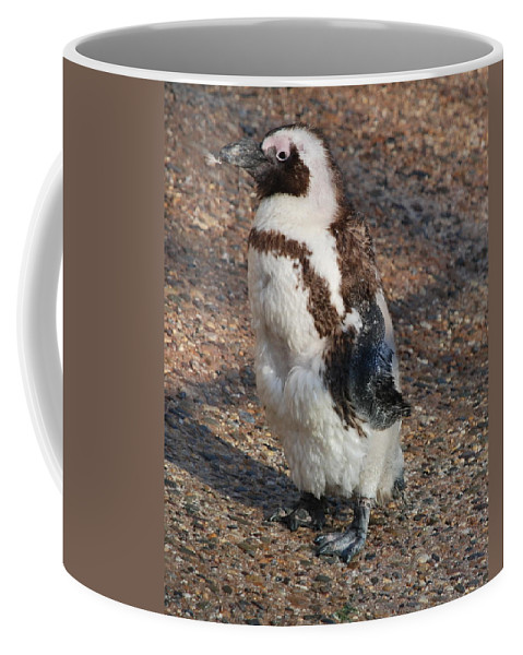 Penguin Coffee Mug featuring the photograph Baby African Penguin by Richard Bryce and Family