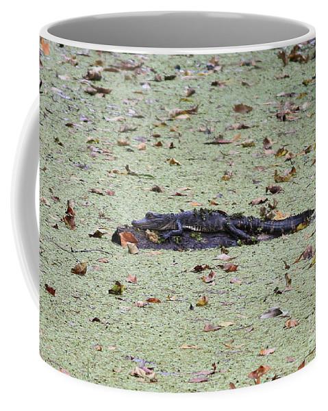 Gator Coffee Mug featuring the photograph Baby Gator In The Swamp by Carol Groenen