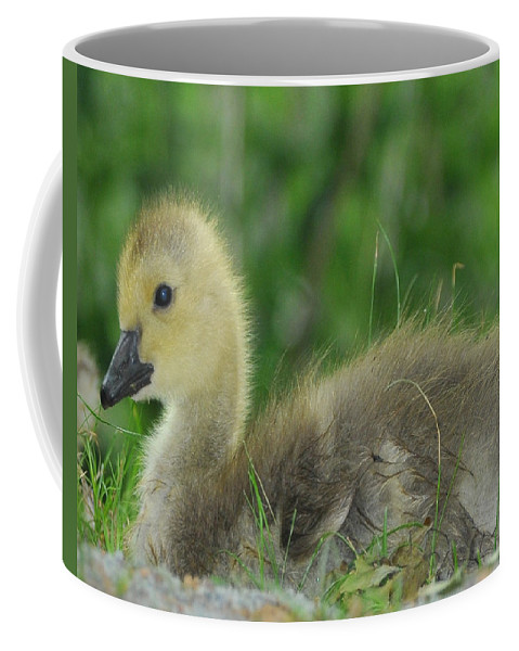 Baby Goose Coffee Mug featuring the photograph Baby Goose Takes A Break by Paul Ward