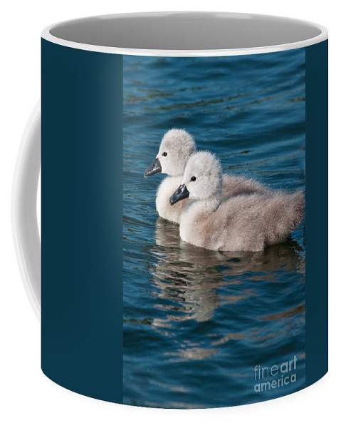 British Coffee Mug featuring the photograph Baby Swans by Andrew Michael