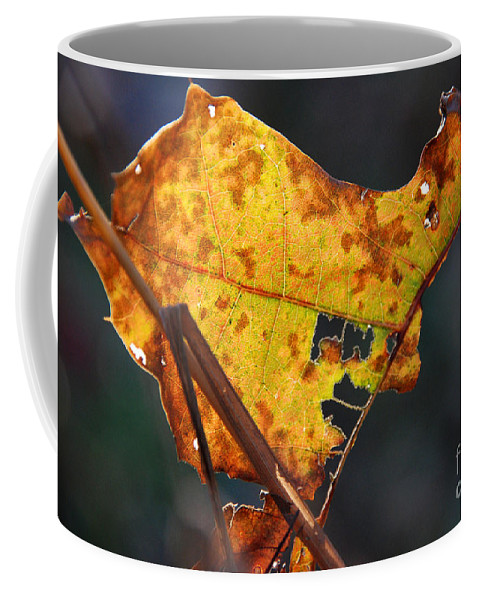Golden Leaf Coffee Mug featuring the photograph Back-lit Golden Leaf by Optical Playground By MP Ray