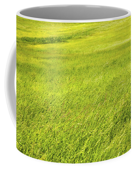 Grass Coffee Mug featuring the photograph Background Of Green Summer Hay Field In Maine by Keith Webber Jr