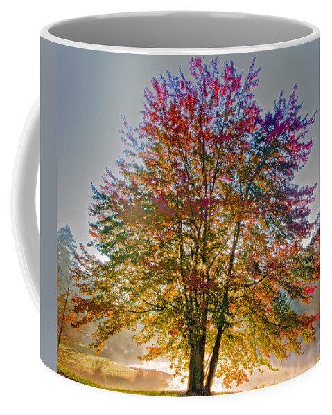 Maple Coffee Mug featuring the photograph Backlit Maple In Autumn's Light by Rob Travis