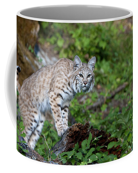 Sandra Bronstein Coffee Mug featuring the photograph Balancing Act by Sandra Bronstein