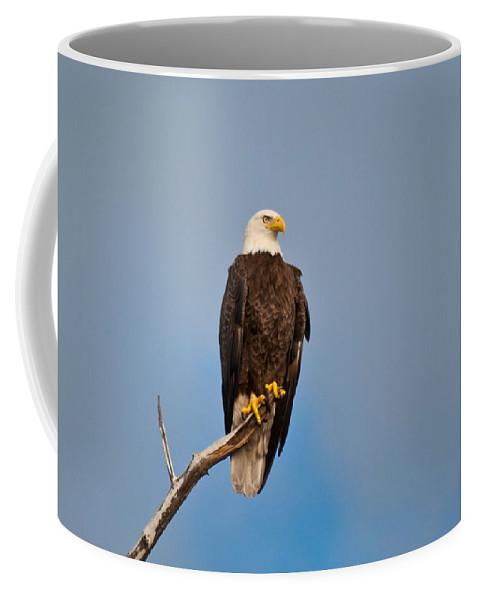 Bald Eagle Coffee Mug featuring the photograph Bald Eagle - Symbol Of Justice by Christine Stonebridge