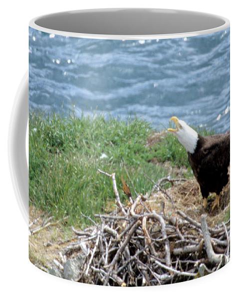 Bald Eagle Coffee Mug featuring the photograph Bald Eagle Calling by Larry Allan