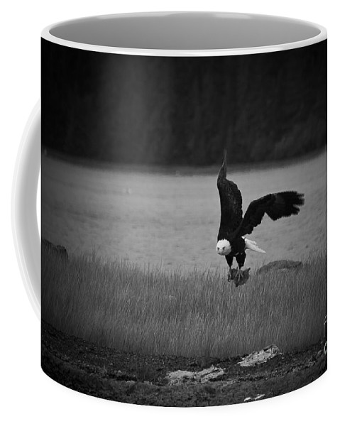 Alaska Coffee Mug featuring the photograph Bald Eagle Take Off Series 6 Of 8 by Darcy Michaelchuk