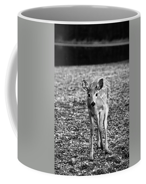 Animal Coffee Mug featuring the photograph Bambi In Black And White by Sebastian Musial