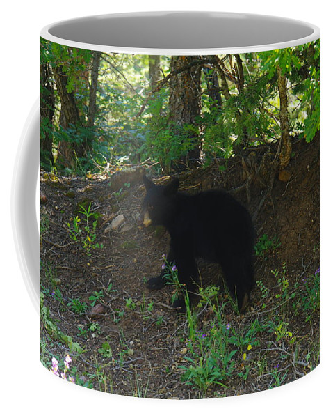 Animals Coffee Mug featuring the photograph Bear Cub by Jeff Swan