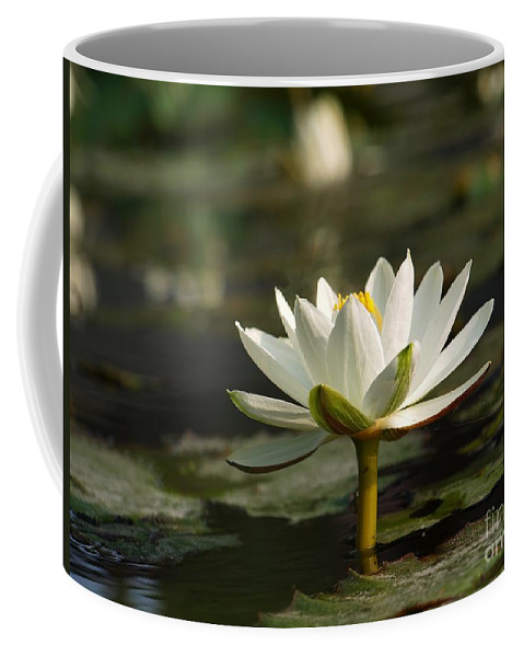 Lily Coffee Mug featuring the photograph Beautiful White Lotus Flower by Yali Shi