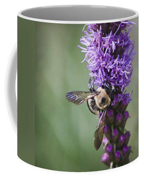 Gayfeather Coffee Mug featuring the photograph Bee On Gayfeather Squared 2 by Teresa Mucha