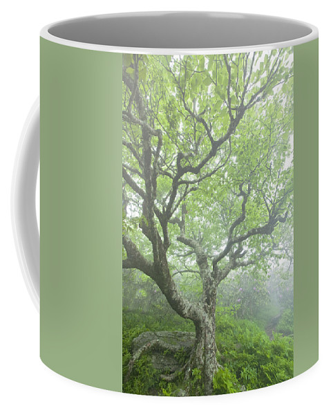 Beech Tree Coffee Mug featuring the photograph Beech At Craggy by Rob Travis