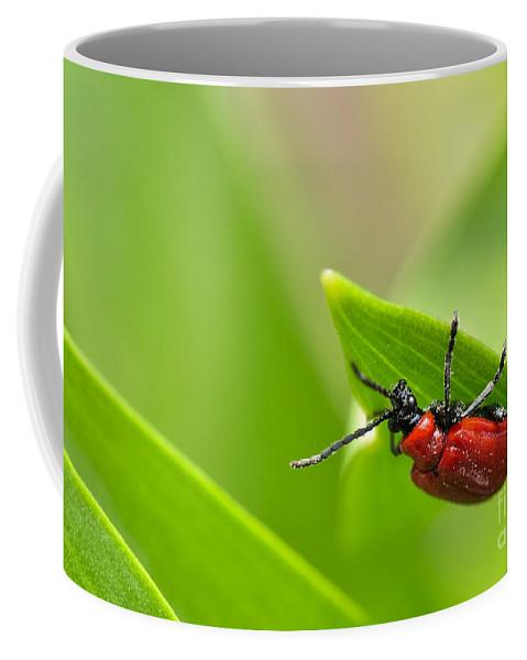 Beetle.red Beetle Coffee Mug featuring the photograph Beetle by Evmeniya Stankova
