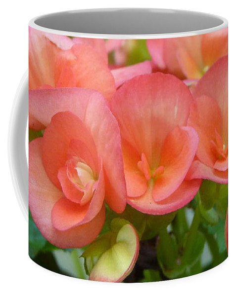Begonias Coffee Mug featuring the photograph Begonias by Carla Parris