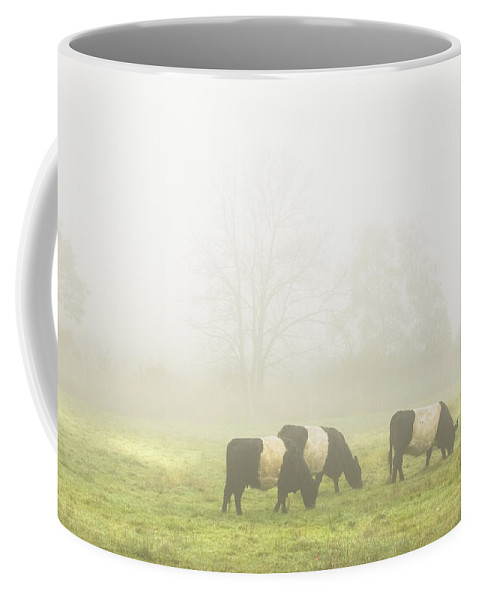 Cow Coffee Mug featuring the photograph Belted Galloway Cows Grazing On Foggy Farm Field Maine by Keith Webber Jr
