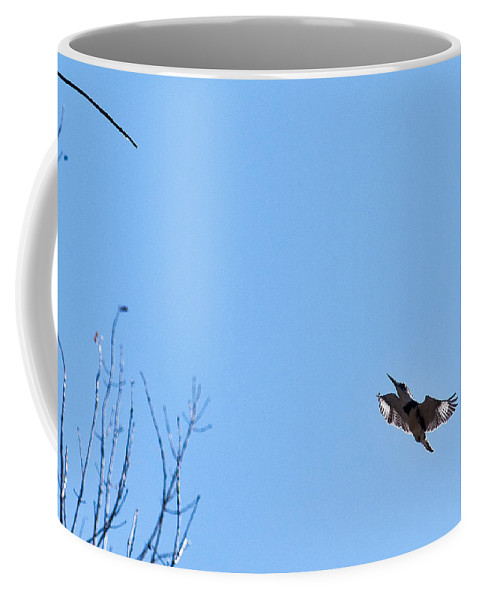 Belted Kingfisher Coffee Mug featuring the photograph Belted Kingfisher Landing by Edward Peterson