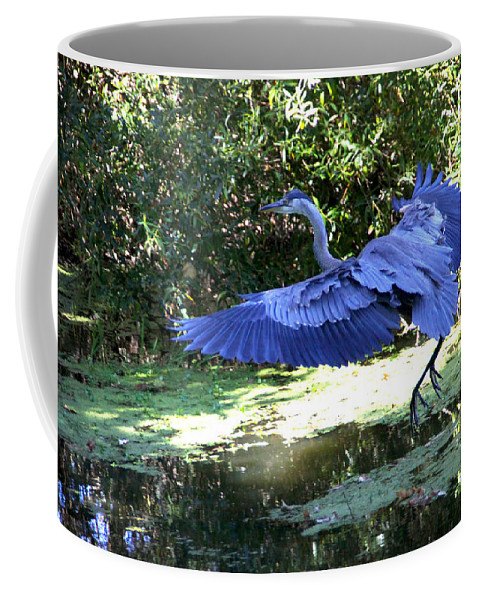 Big Coffee Mug featuring the photograph Big Blue In Flight by Diana Haronis
