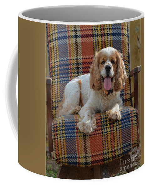 Nature Coffee Mug featuring the photograph Bingo And His Chair by Debbie Portwood