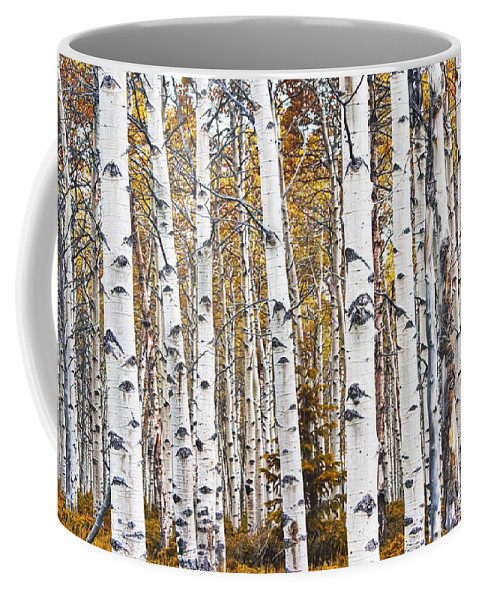 Art Coffee Mug featuring the photograph Birch Trees No.0644 by Randall Nyhof