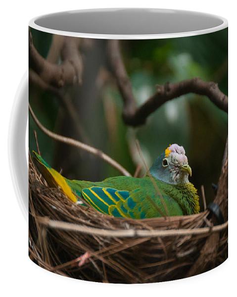 Animals Coffee Mug featuring the digital art Bird On Nest by Carol Ailles