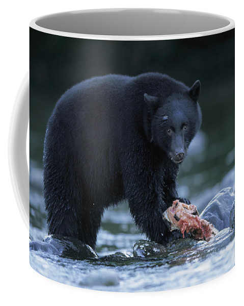 Pacific Ocean Coffee Mug featuring the photograph Black Bear With Salmon Carcass by Joel Sartore