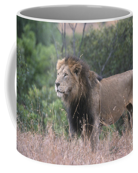 Lion Coffee Mug featuring the photograph Black Maned Lion by Sandra Bronstein