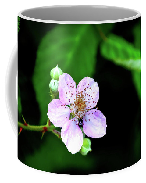 Blackberry Coffee Mug featuring the photograph Blackberry Bloom by Diego Re