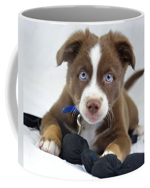 Dog Coffee Mug featuring the photograph Blake by Julie Niemela