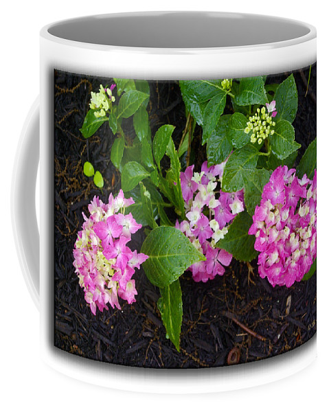 2d Coffee Mug featuring the photograph Blossoms And Rain Drops by Brian Wallace