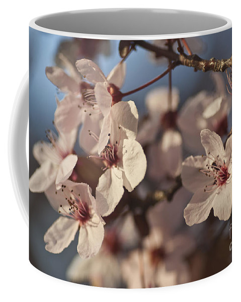 Blossom Coffee Mug featuring the photograph Blossoms by Jim And Emily Bush