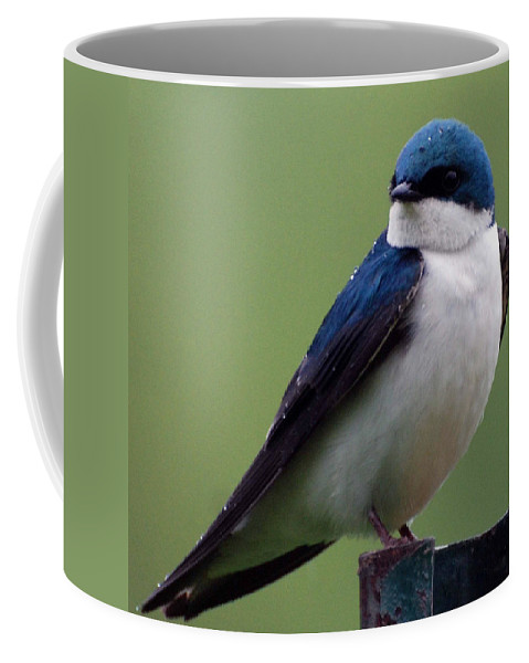 Bluebird Coffee Mug featuring the photograph Blue Bird Of Happiness by Paul Ward