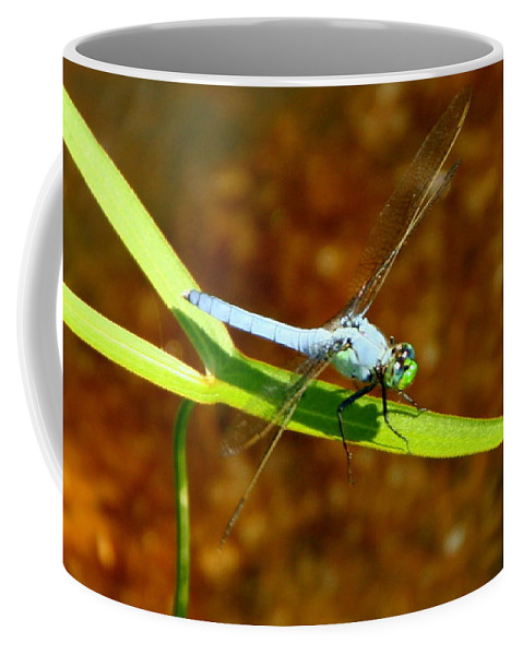 Blue Dasher Coffee Mug featuring the photograph Blue Dasher Dragonfly by Laurel Talabere