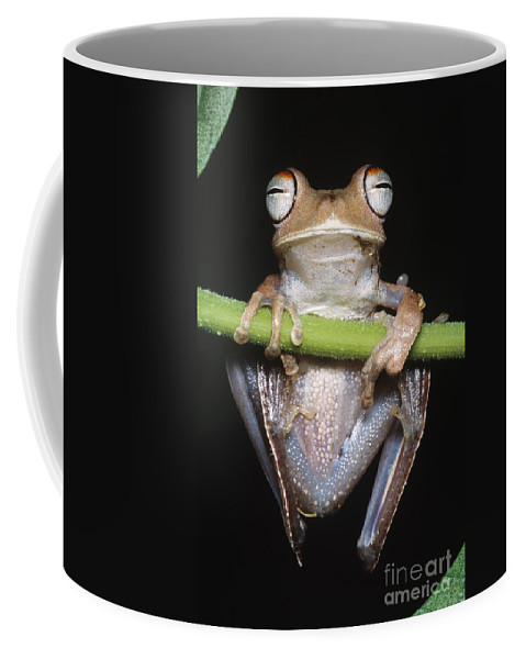 Blue-flanked Tree Frog Coffee Mug featuring the photograph Blue-flanked Tree Frog by Dante Fenolio