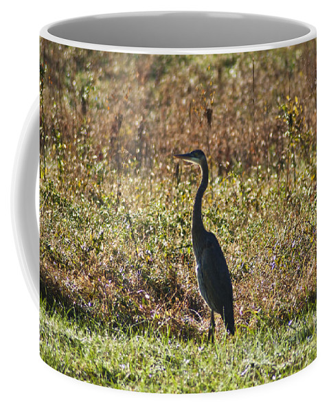 Blue Heron At Valley Forge Coffee Mug featuring the photograph Blue Heron At Valley Forge by Bill Cannon